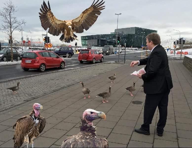 SDG vultures